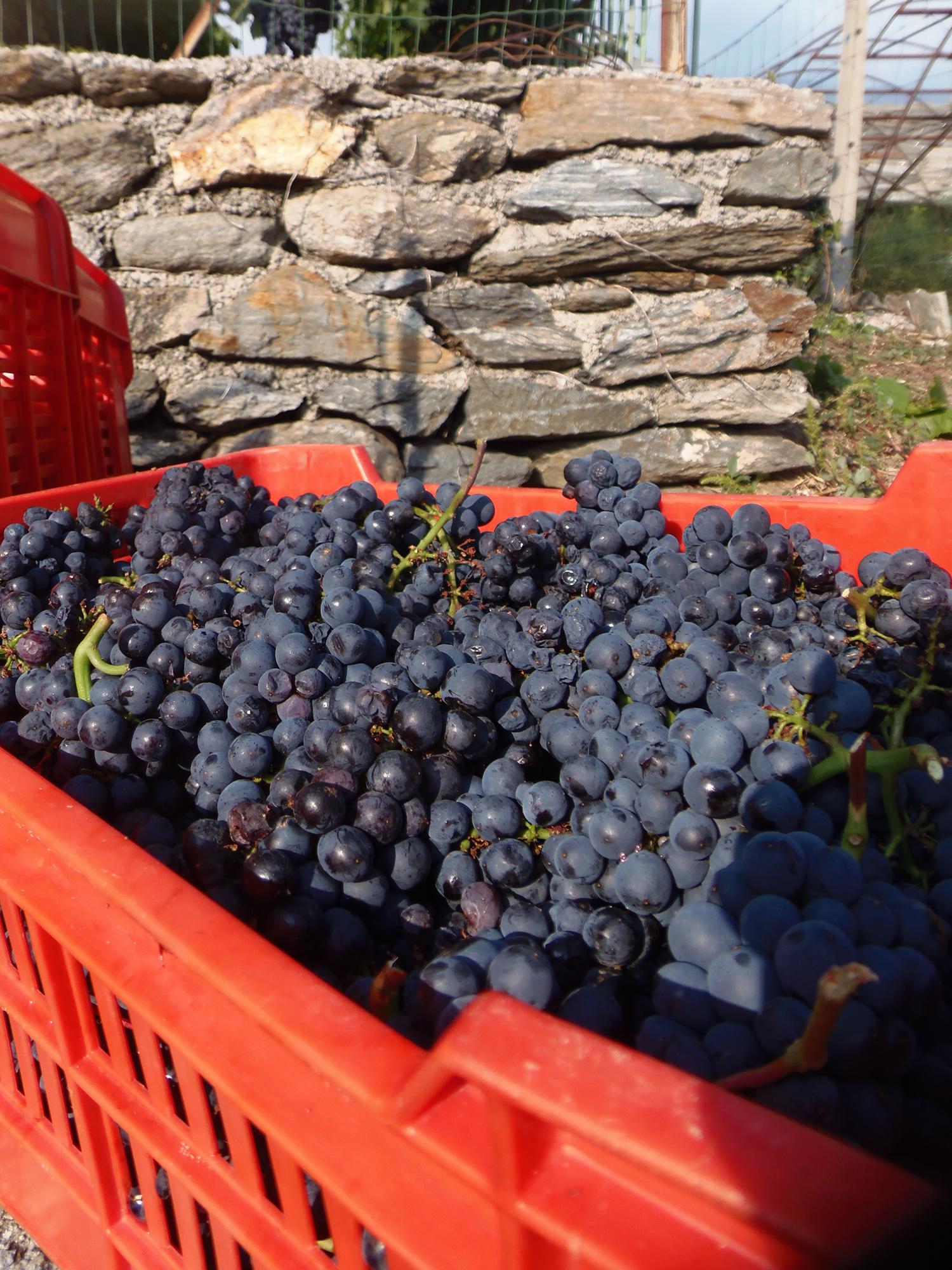 Cosa sarebbe la viticoltura valsusina senza la D.O.C.