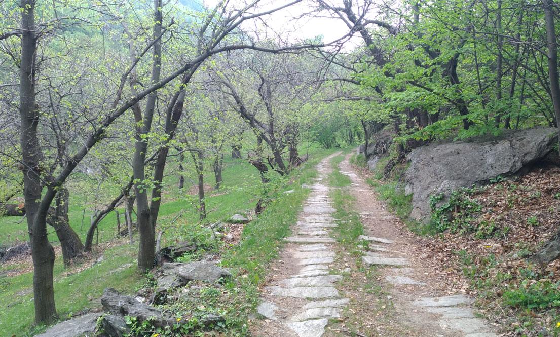 Sentiero del Marrone e della Pietra in Valle di Susa