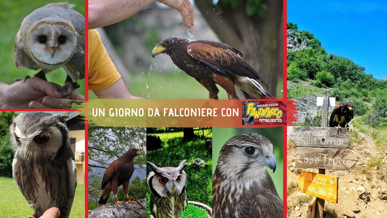 Idee vacanza per famiglie in Val Susa: Un giorno da falconiere