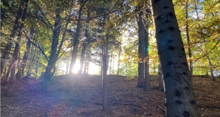Yoga nel parco Orsierà Rocciavrè il bosco - Valle di Susa Turismo