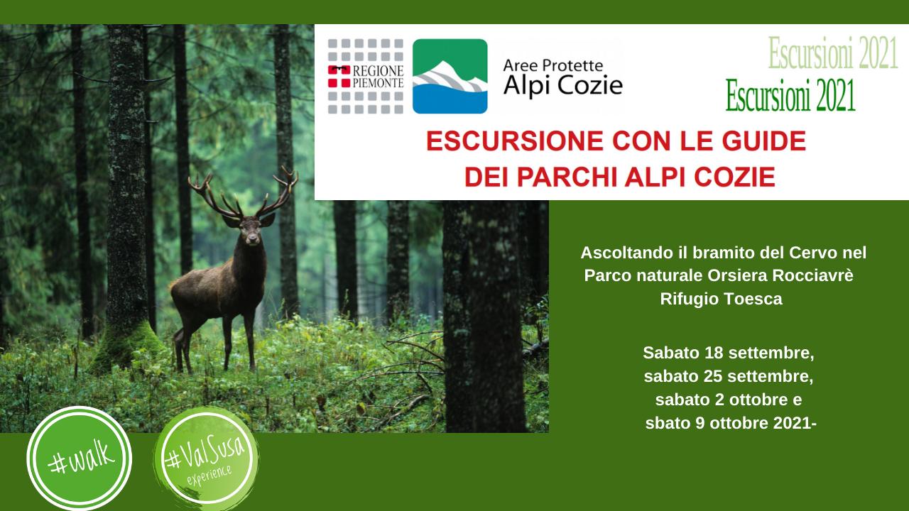 Ascoltando il bramito del Cervo nel Parco naturale Orsiera Rocciavrè   Rifugio Toesca