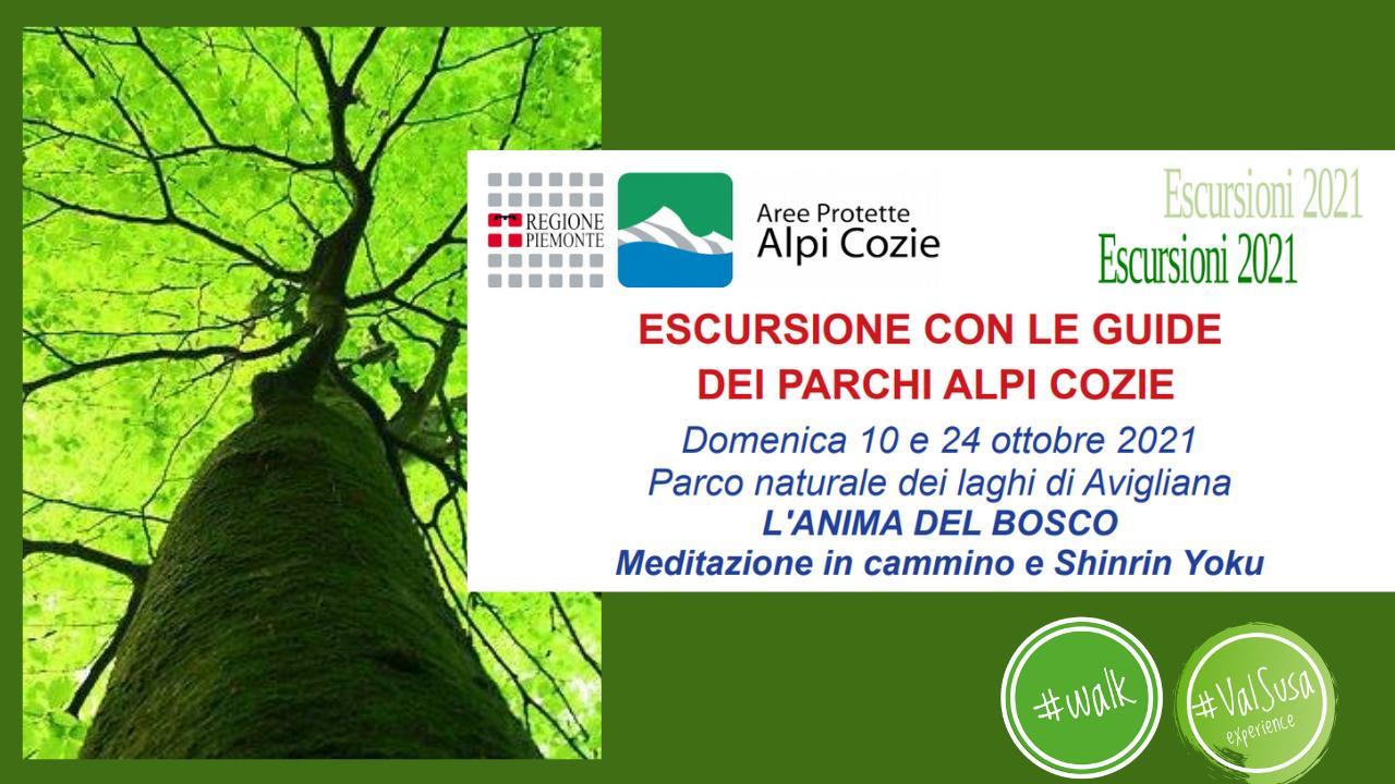 L'anima del bosco ad Avigliana - Escursione con le guide dei Parchi Alpi Cozie
